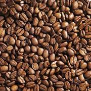 Best Quality Arabica Coffee Beans to Order